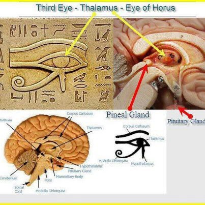 pinal gland 3rd eye